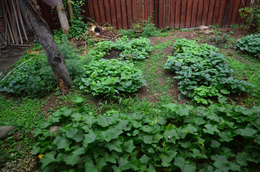 小菜園,讓長輩自己種菜。
